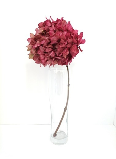 Kuru Çiçek Deposu Pembe Solmayan Tek Dal Ortanca Pembe